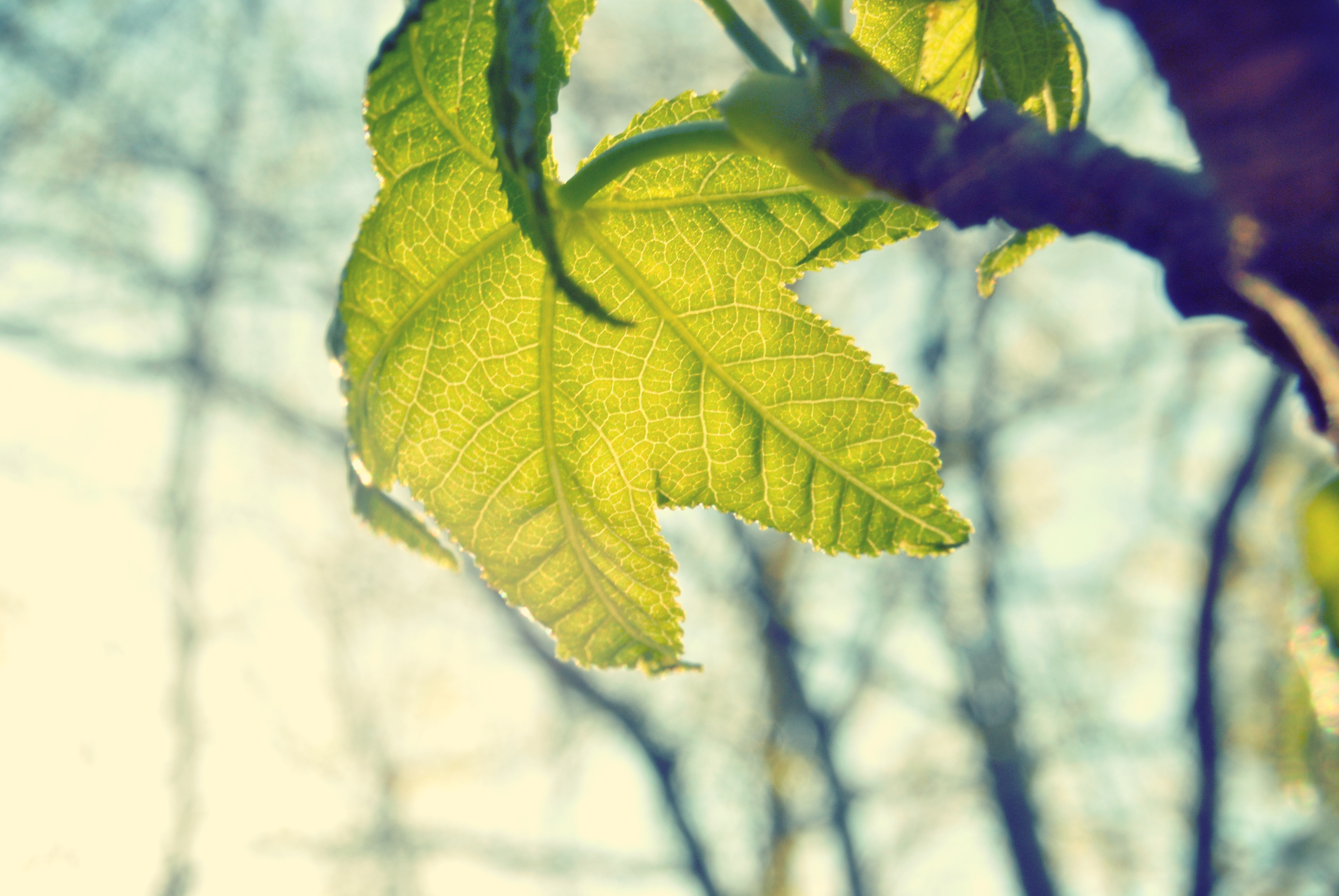 Foglia verde in bilico - percorsi accessibili