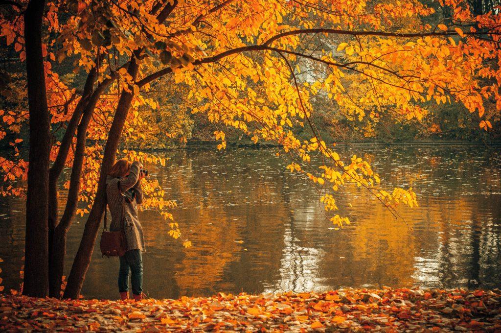 Herastrau park, Bucharest foliage